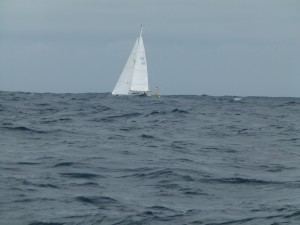 One of the racing fleet passes on the 'high seas'
